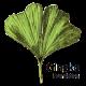 Gingko Foundation